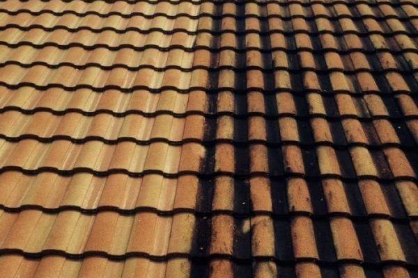 Best Roof Cleaning In Florida Pressure Washing Experts